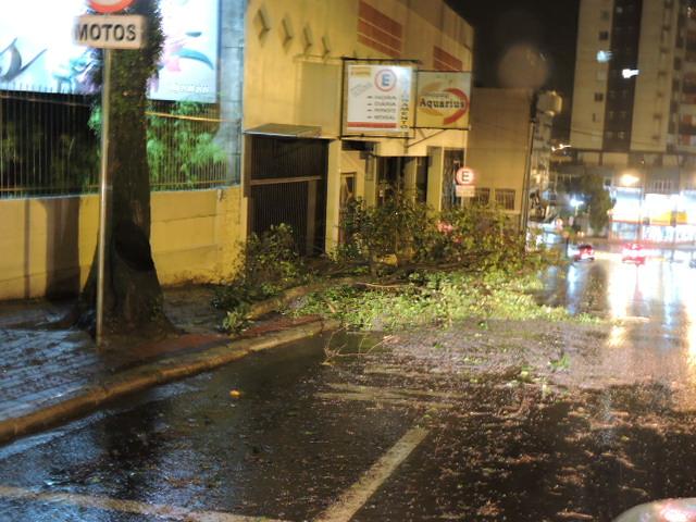 No centro da cidade, uma árvore caiu nos fundos do Shopping Aquários. Foto: Evandro Artuzi
