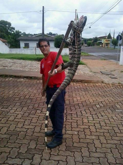 Animal foi solto em seu habitat natural. Foto: SM