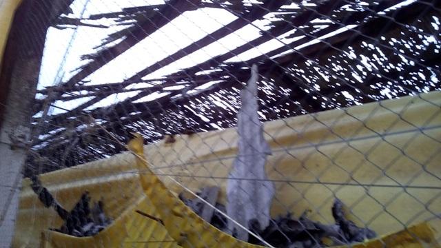 Aviário ficou completamente destruído. Foto: Evandro Artuzi/RBJ