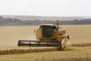 Colheita de trigo. Foto: Orlando Kissner - 2010