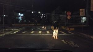 animais_furtados