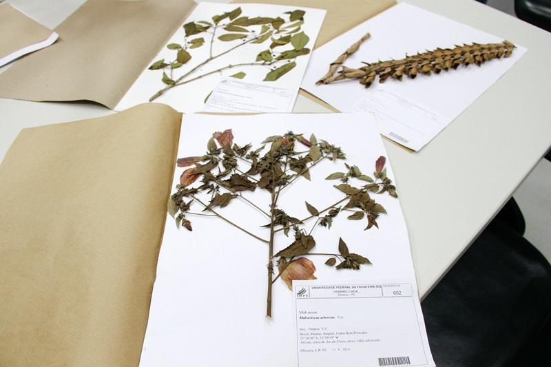 Coleção Biológica Realeza possui 1.161 materiais informatizados e disponibilizados on-line. Foto de divulgação