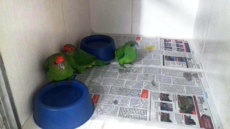 As aves foram encontradas em situação de maus tratos. Foto: Polícia Rodoviária Federal.