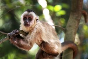 monkey-1197112_960_720