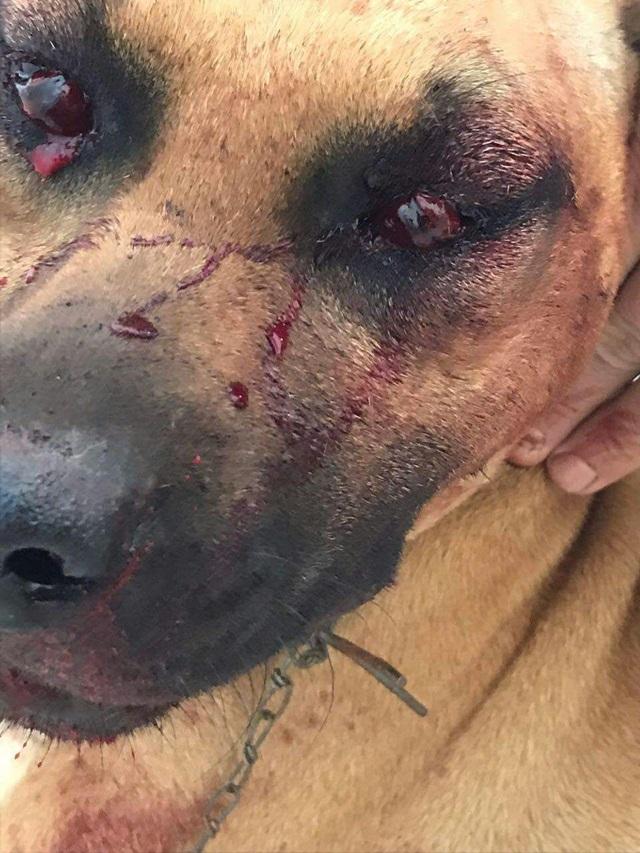Animal teve traumatismo craniano. Foto: Divulgação Polícia Militar